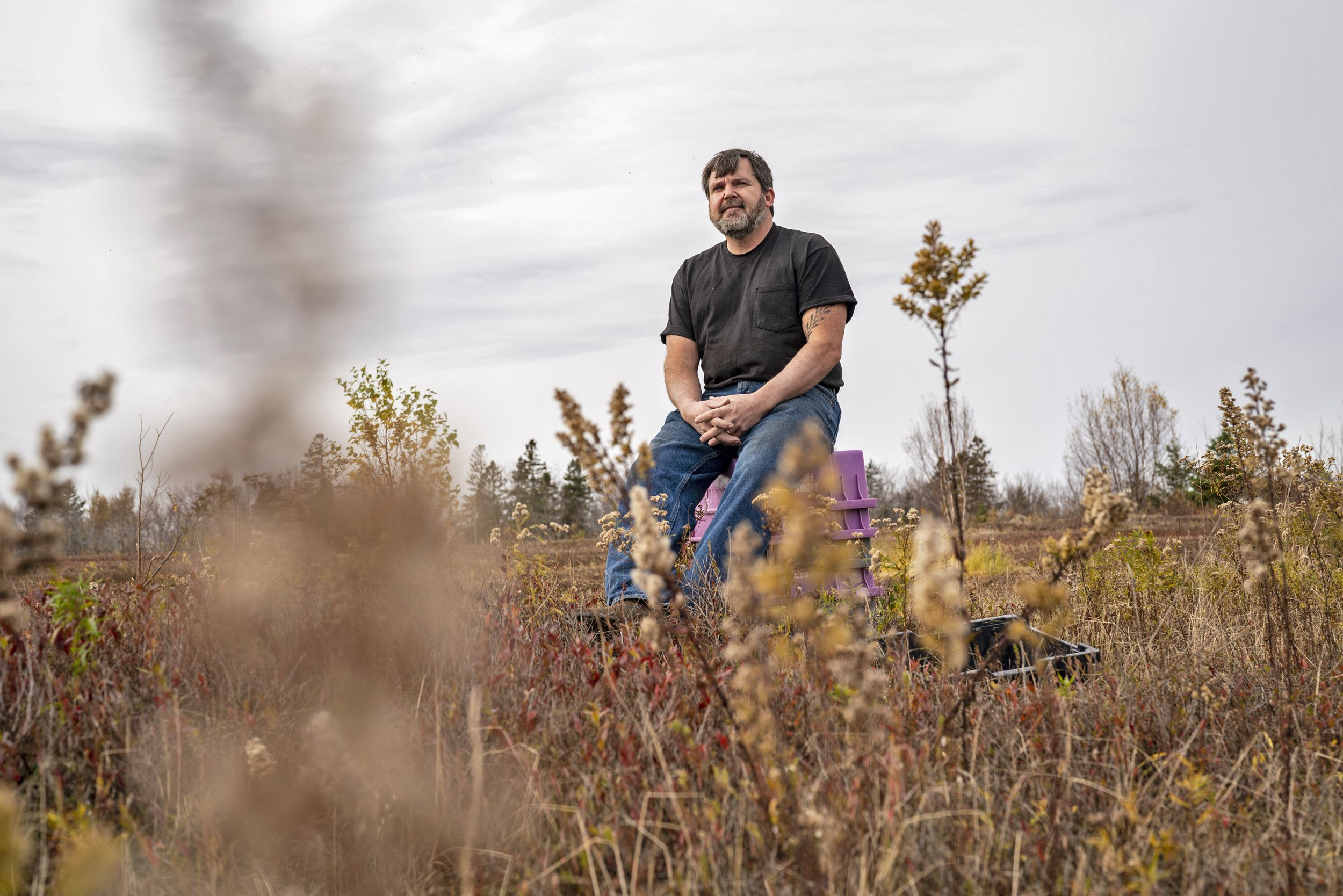 Greg Bridges sits in 100-acre wild blueberry field that he just sold in Charlotte, Maine. (Sarah Rice / for NBC News)